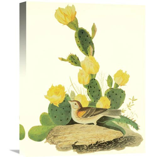 Global Gallery Grass Finch Or Bay Winged Bunting By John James Audubon, 16 X 20-Inch Wall Art