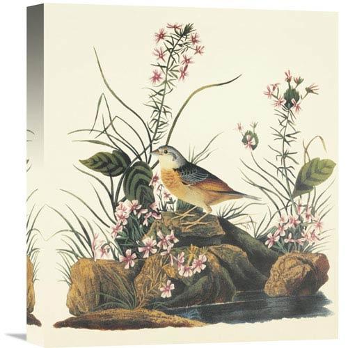 Global Gallery Yellow Winged Sparrow By John James Audubon, 14 X 16-Inch Wall Art