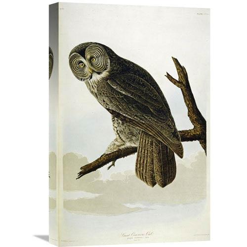 Global Gallery Great Cinereous Owl By John James Audubon, 14 X 22-Inch Wall Art