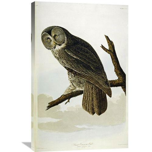Global Gallery Great Cinereous Owl By John James Audubon, 23 X 36-Inch Wall Art