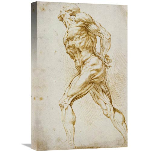 Global Gallery Anatomical Study: Nude Male By Peter Paul Reubens, 13 X 22-Inch Wall Art