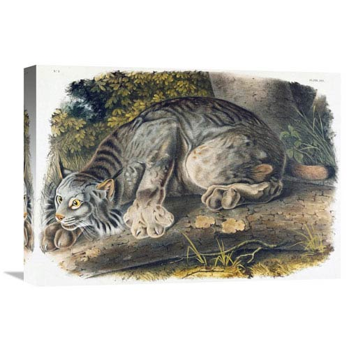 Global Gallery Canada Lynx By John James Audubon, 22 X 15-Inch Wall Art