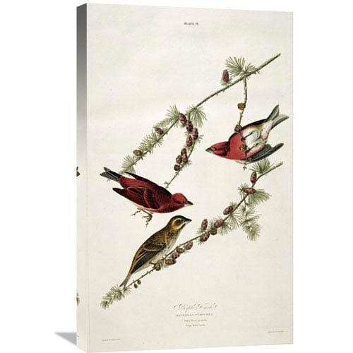 Global Gallery Purple Finch By John James Audubon, 18 X 30-Inch Wall Art