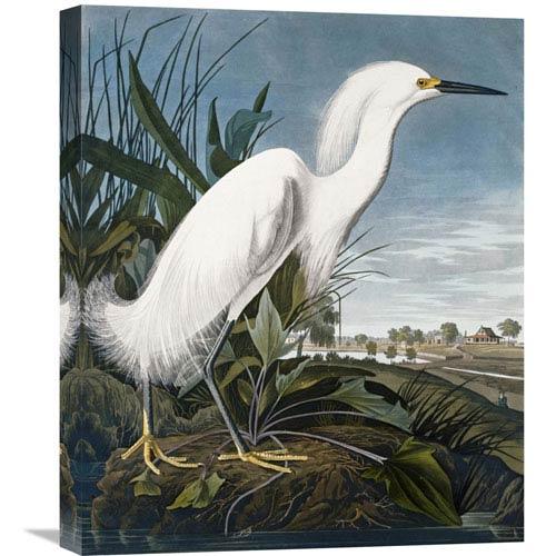 Global Gallery Snowy Heron By John James Audubon, 18 X 22-Inch Wall Art