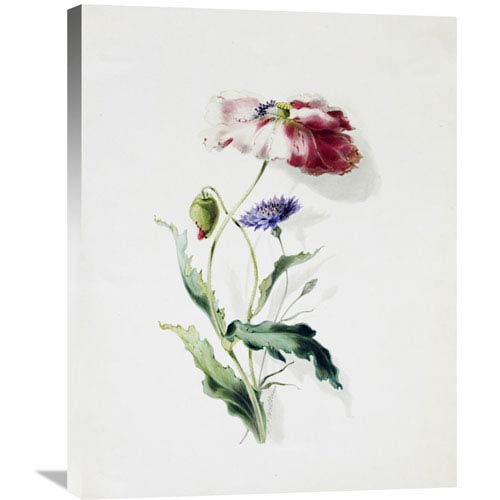Global Gallery A Scarlet Poppy And A Cornflower By Thomas Holland, 23 X 30-Inch Wall Art