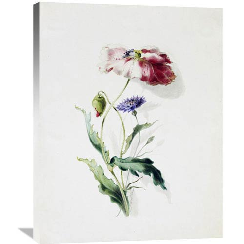 Global Gallery A Scarlet Poppy And A Cornflower By Thomas Holland, 28 X 36-Inch Wall Art
