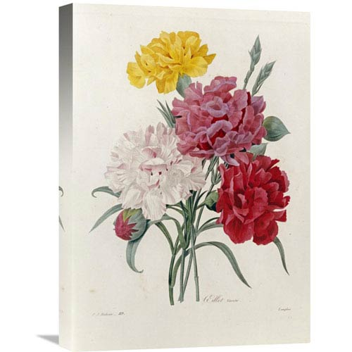 Global Gallery Carnations By Pierre Joseph Redoute, 15 X 22-Inch Wall Art