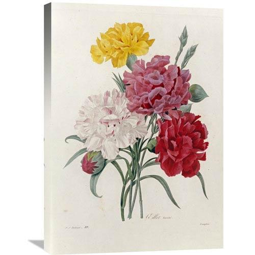 Global Gallery Carnations By Pierre Joseph Redoute, 21 X 30-Inch Wall Art