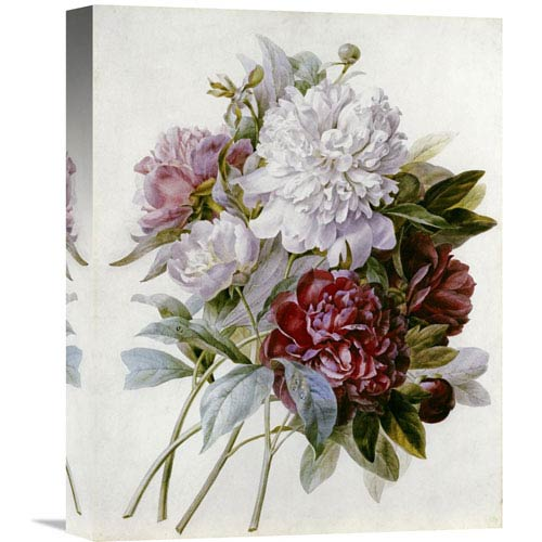 Global Gallery A Bouquet Of Red, Pink And White Peonies By Pierre Joseph Redoute, 12 X 16-Inch Wall Art