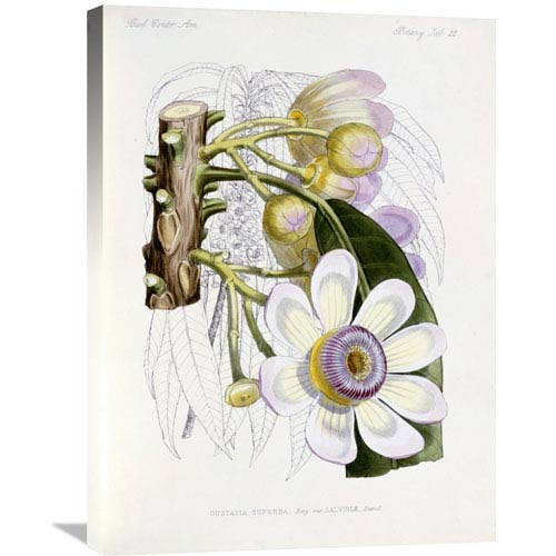 Global Gallery Membrillo By J. G. Keulemans, 22 X 30-Inch Wall Art