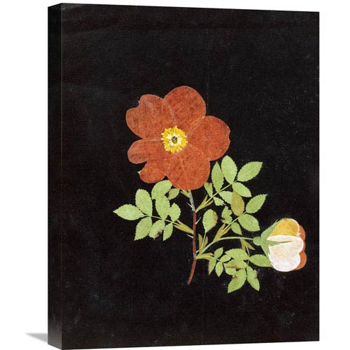 Global Gallery Cut Out Watercolour Of A Flower By Margaret Nash, 16 X 22-Inch Wall Art