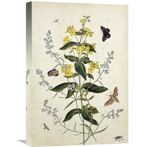 Global Gallery Yellow Loosestrife And Other Wild Flowers By Thomas Robins Jr., 15 X 22-Inch Wall Art