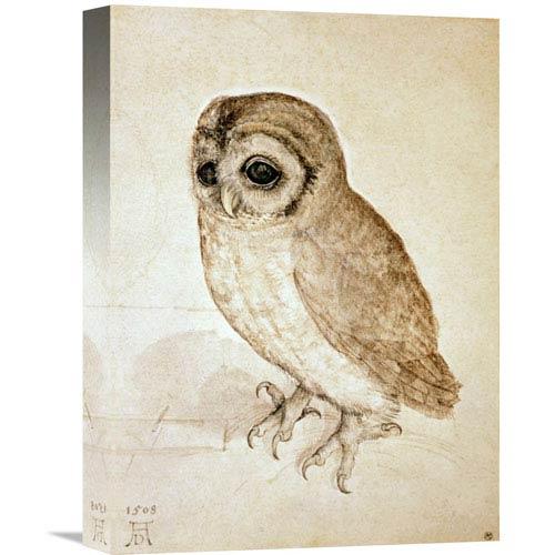 Global Gallery Screech Owl By Albrecht Durer, 11 X 16-Inch Wall Art