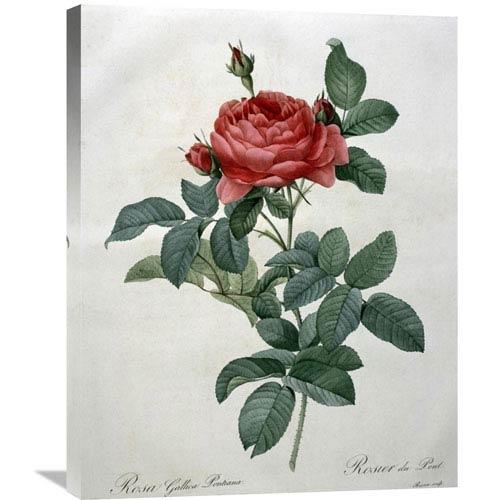 Global Gallery Rosa Gallica By Pierre Joseph Redoute, 23 X 30-Inch Wall Art