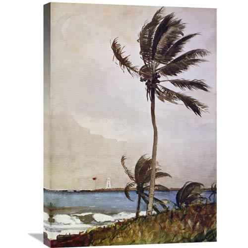 Global Gallery Palm Tree Nassau By Winslow Homer, 21 X 30-Inch Wall Art