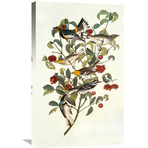 Global Gallery Audubons Warbler By John James Audubon, 18 X 30-Inch Wall Art