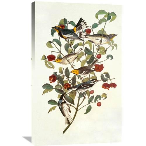Global Gallery Audubons Warbler By John James Audubon, 22 X 36-Inch Wall Art
