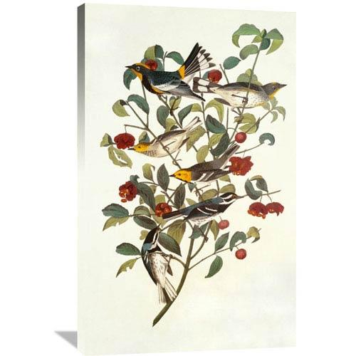 Global Gallery Audubons Warbler By John James Audubon, 25 X 40-Inch Wall Art