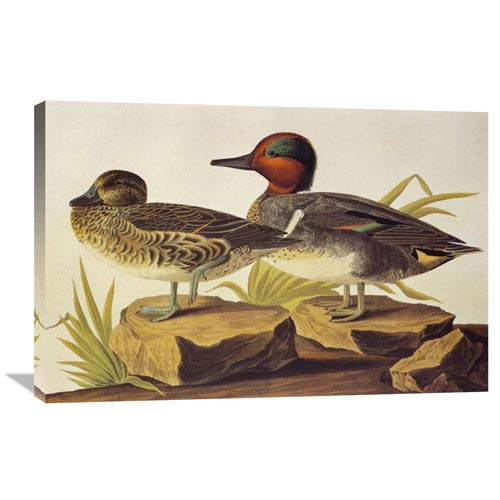 Global Gallery American Green Winged Teal By John James Audubon, 36 X 24-Inch Wall Art