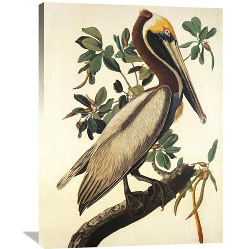 Global Gallery Brown Pelican By John James Audubon, 30 X 40-Inch Wall Art
