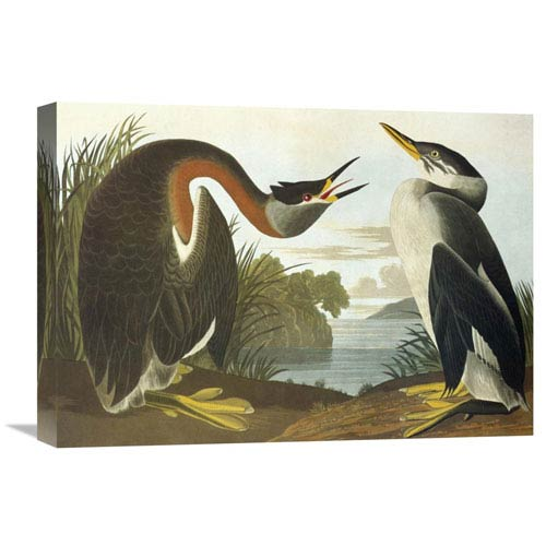 Global Gallery Red Necked Grebe By John James Audubon, 22 X 15-Inch Wall Art