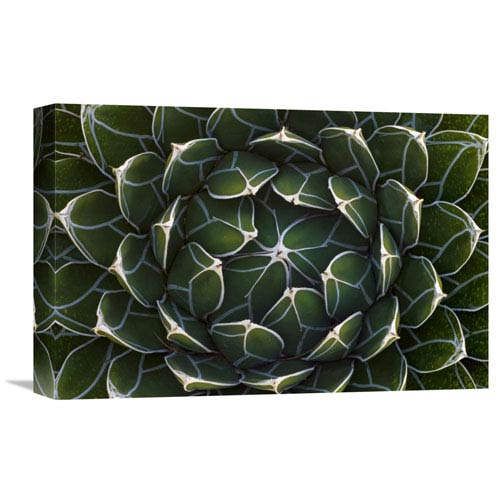 Global Gallery Queen Victorias Agave, Saguaro National Park, Arizona By Ingo Arndt, 12 X 18-Inch Wall Art