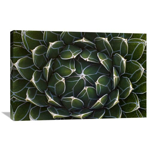 Global Gallery Queen Victorias Agave, Saguaro National Park, Arizona By Ingo Arndt, 24 X 36-Inch Wall Art