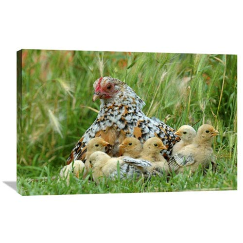 Global Gallery Fowl With Chicks By Jan Baks, 24 X 36-Inch Wall Art