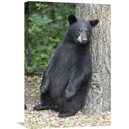 Black Bear Wall Art | Bellacor