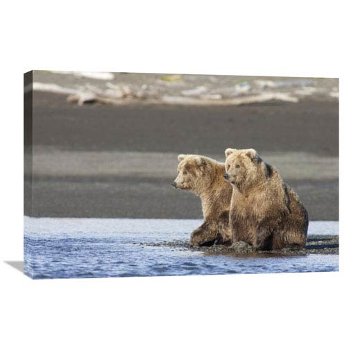 Global Gallery Grizzly Bear Yearlings On Shore, Katmai National Park, Alaska By Matthias Breiter, 20 X 30-Inch Wall Art