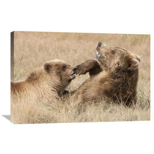 Global Gallery Grizzly Bear Mother And Cub Playing, Katmai National Park, Alaska By Matthias Breiter, 24 X 36-Inch Wall Art