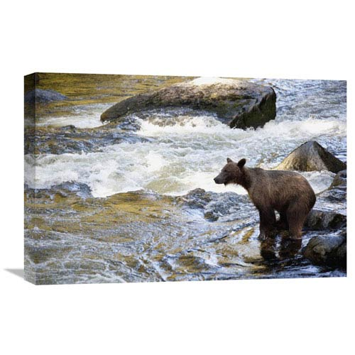 Global Gallery Grizzly Bear Fishing Along Anan Creek, Tongass National Forest, Alaska By Matthias Breiter, 16 X 24-Inch Wall