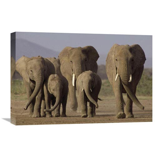 Global Gallery African Elephant Herd With Calves, Amboseli National Park, Kenya By Gerry Ellis, 16 X 24-Inch Wall Art