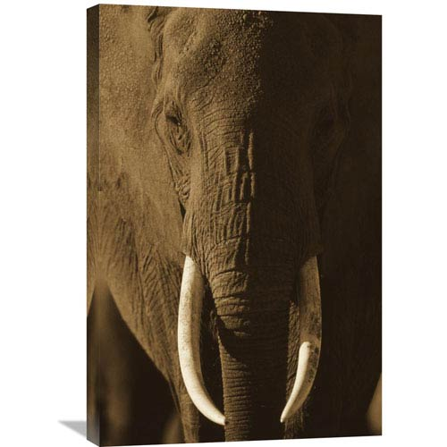 Global Gallery African Elephant Male Portrait With Long Tusks, Kenya By Tim Fitzharris, 30 X 20-Inch Wall Art