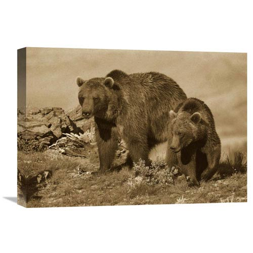 Global Gallery Grizzly Bear Mother With A One Year Old Cub, North America By Tim Fitzharris, 15 X 22-Inch Wall Art