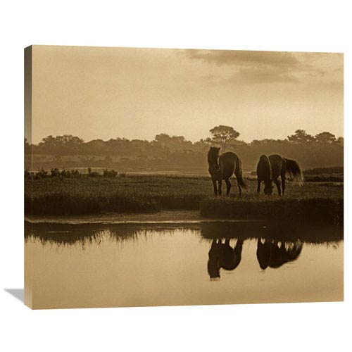 Global Gallery Wild Horse Pair Grazing At Assateague Island National Seashore, Maryland By Tim Fitzharris, 29 X 36-Inch Wall