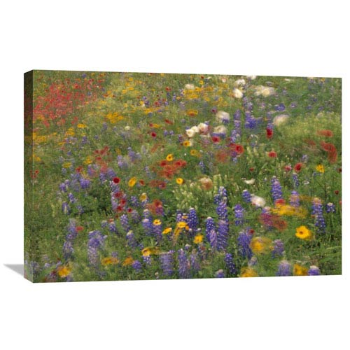 Global Gallery Wildflowers Blowing In The Wind, Hill Country, Texas By Tim Fitzharris, 20 X 30-Inch Wall Art