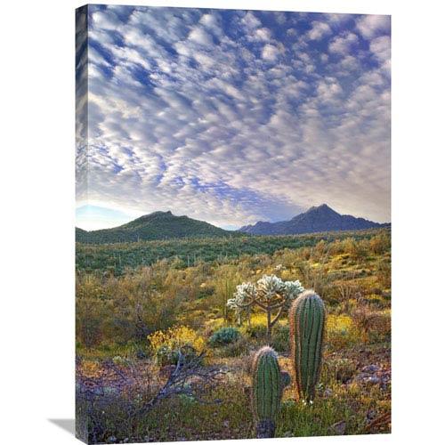 Global Gallery Saguaro And Teddybear Cholla Amid Flowering Lupine And California Brittlebush By Tim Fitzharris, 30 X 21-Inch