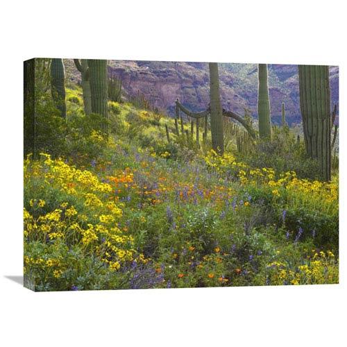 Global Gallery Saguaro Amid Flowering Lupine, Organ Pipe Cactus National Monument, Arizona By Tim Fitzharris, 18 X 24-Inch