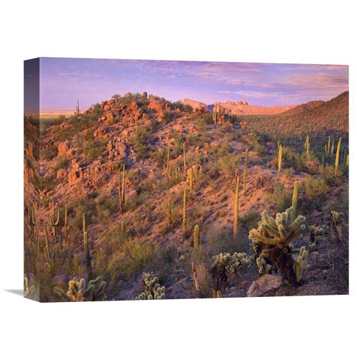 Global Gallery Panther And Safford Peaks Covered With Saguaro And Teddybear Cholla, Saguaro National Park, Arizona By Tim