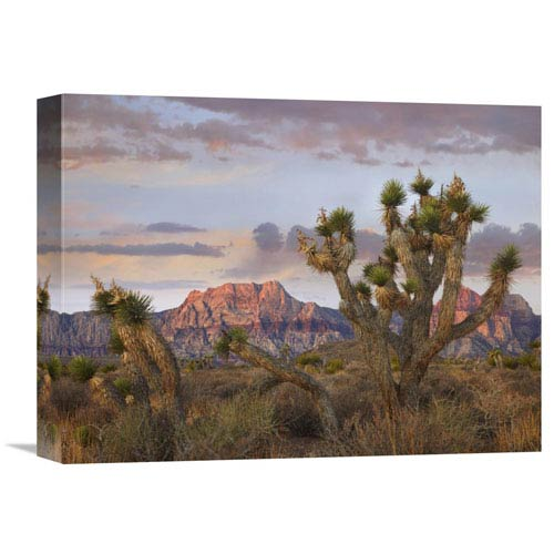 Global Gallery Joshua Tree And Spring Mountains, Red Rock Canyon National Conservation Area, Nevada By Tim Fitzharris, 12 X