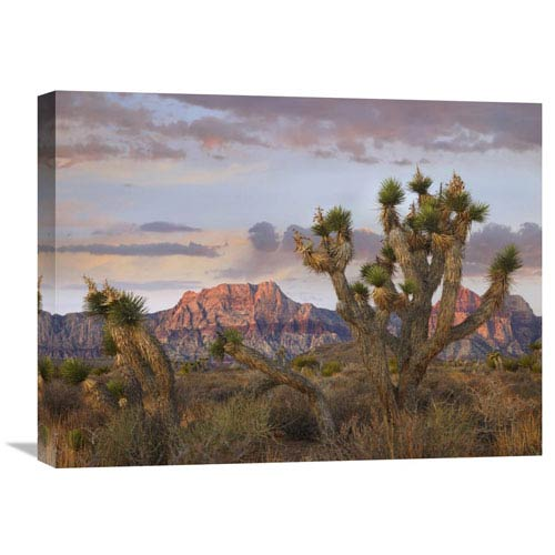 Global Gallery Joshua Tree And Spring Mountains, Red Rock Canyon National Conservation Area, Nevada By Tim Fitzharris, 18 X