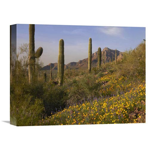 Global Gallery Saguaro Cacti And California Poppy Field At Picacho Peak State Park, Arizona By Tim Fitzharris, 12 X 16-Inch