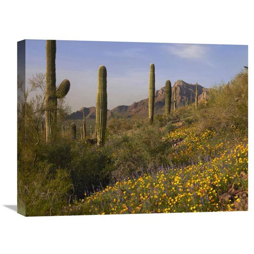 Global Gallery Saguaro Cacti And California Poppy Field At Picacho Peak State Park, Arizona By Tim Fitzharris, 18 X 24-Inch