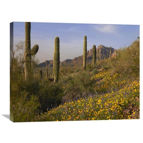 Global Gallery Saguaro Cacti And California Poppy Field At Picacho Peak State Park, Arizona By Tim Fitzharris, 24 X 32-Inch