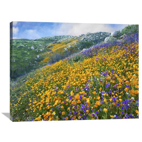 Global Gallery California Poppy And Desert Bluebell Flowers, Canyon Hills, Santa Ana Mountains, California By Tim Fitzharris,