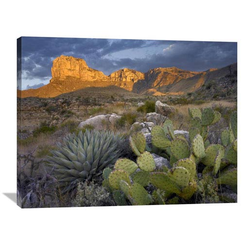Global Gallery Opuntia Cactus And Agave, Guadalupe Mountains National Park, Chihuahuan Desert, Texas By Tim Fitzharris, 30 X