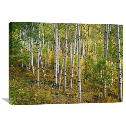 Global Gallery Aspen Forest, Colorado By Tim Fitzharris, 24 X 32-Inch Wall Art