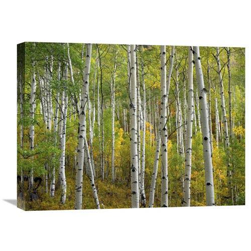 Global Gallery Aspen Trees In Fall, Colorado By Tim Fitzharris, 18 X 24-Inch Wall Art
