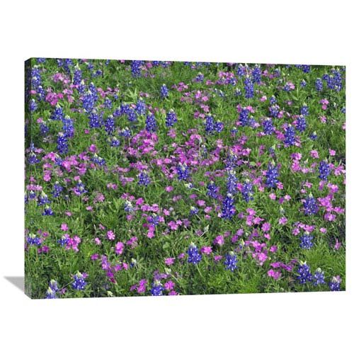 Global Gallery Sand Bluebonnet And Pointed Phlox By Tim Fitzharris, 30 X 40-Inch Wall Art
